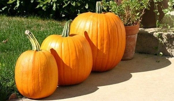 Осень. Правильное питание.